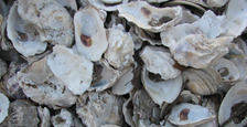 Thumb_oysters-001